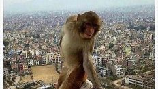 Instagram I felt cute monkey meme