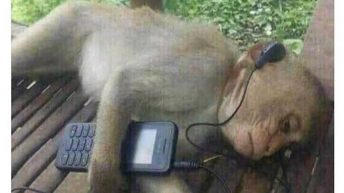 Monkey listening to sad music meme