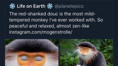 funny monkey makeup tweet