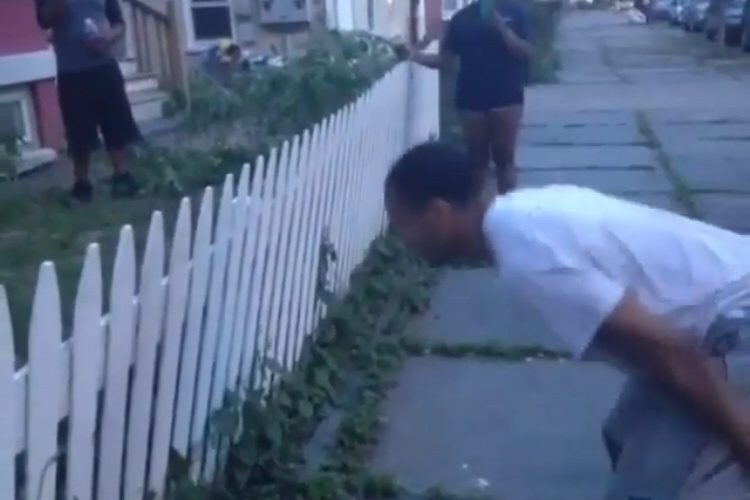 Attempting to jump over fence and fail