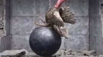 I came in like a butterball turkey meme