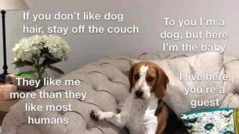 When you visit my house please remember dog meme