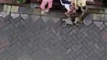 monkey tries to kidnap baby