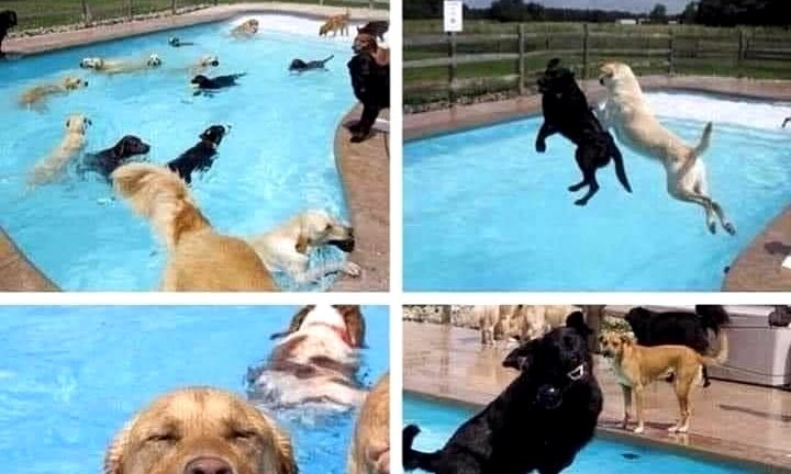 Dog pool party meme