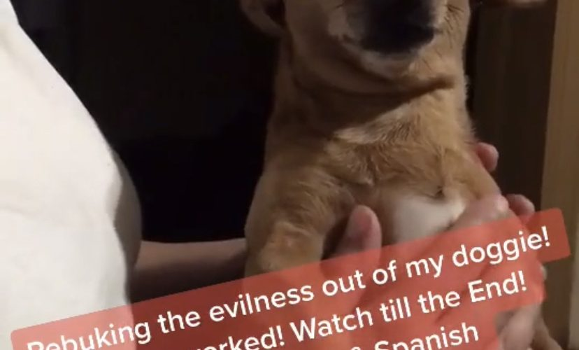 Chihuahua exorcism
