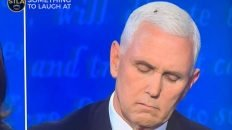 Even flies know bullshit when they smell it Mike Pence VP debate meme