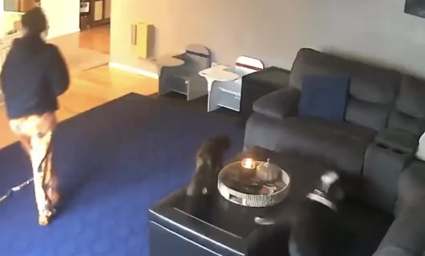 Cat lights tail on fire