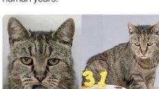 This is the world's oldest cat Nutmeg meme
