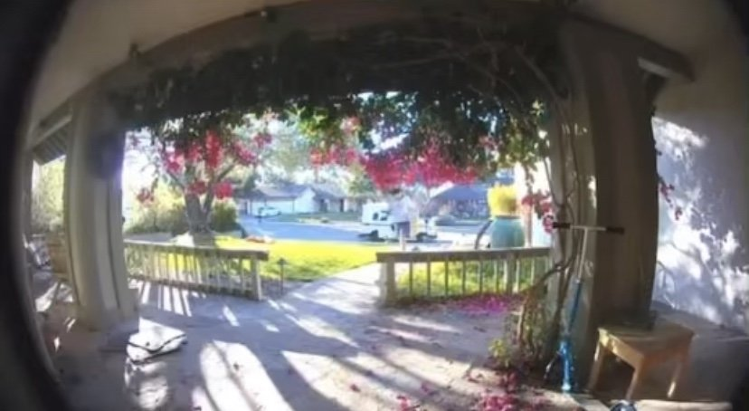Pikachu porch thief