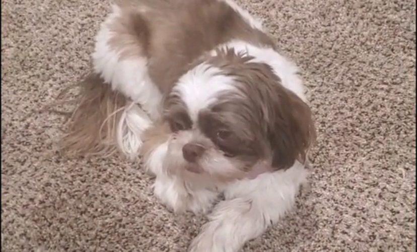 Dog eats owner's underwear