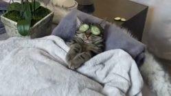 Cat enjoys spa day