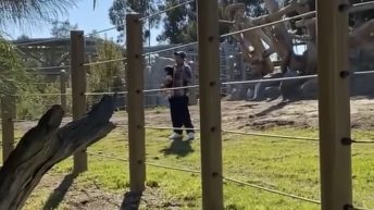 Man jumps into San Diego elephant enclosure