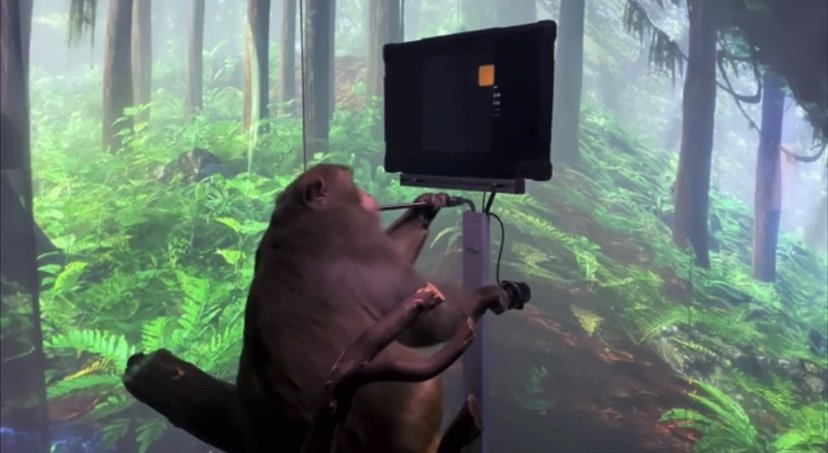 A monkey plays video games with his mind