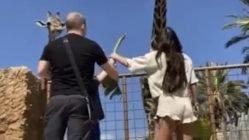 Feeding a giraffe almost goes wrong