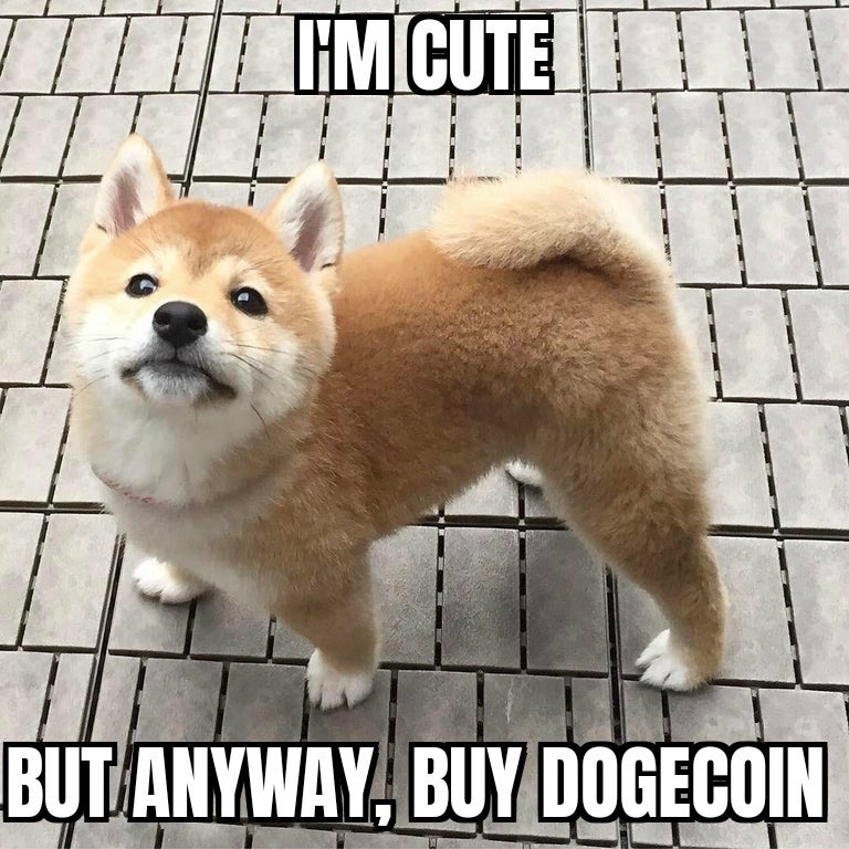 I'm cute by anyway, buy dogecoin meme