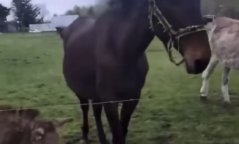 Donkey laughs at dog touching electric fence