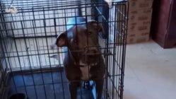Talking dog tells owner he's going nowhere
