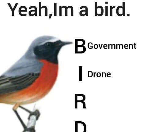 Yeah, I'm a bird government drone meme
